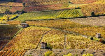 9 regiones para hacer vendimia en Francia
