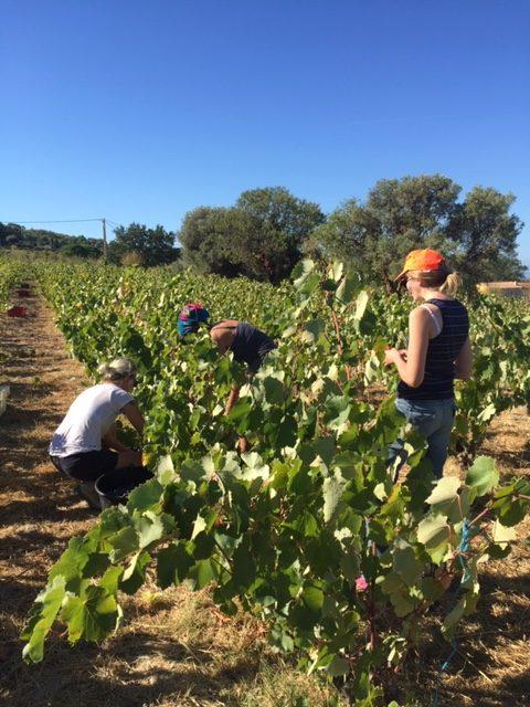 reconversión profesional al vino