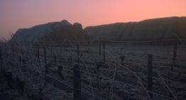 Reconversión profesional al vino en Francia